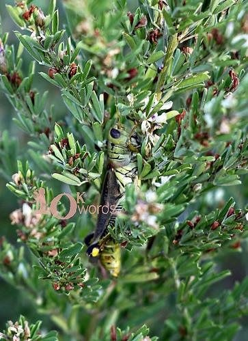 9.24 (grasshopper)