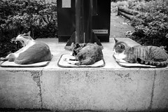 three cats (Clark Tanaka) Tags: explore 800 ef35mmf14lusm canoneos5dmarkii ¹⁄₄₀秒f32 exploredsep30th2010