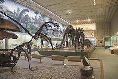 yale_peabody128 (rynoceras) Tags: museum dinosaur connecticut paleontology newhaven geology yale prehistoric peabody dinosaurs fossils comobluff bonewars ocmarsh othnielmarsh