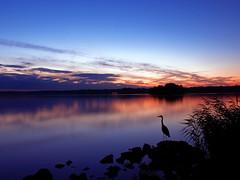 reiher / heron (~janne) Tags: longexposure sunset sky berlin heron colors himmel wolken olympus sonne zuiko belichtung vogel janne farben tegel reiher janusz tegelersee e520 ziob