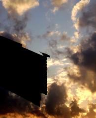 Liberdade acima de tudo de bem com a vida e de bem com o mundo   ♪ (Nay Hoffmann) Tags: de fim nuvens noite ceu telhado tarde passaro