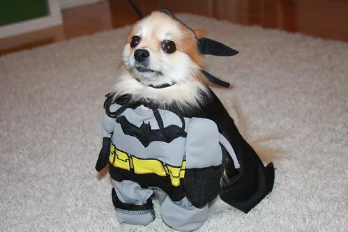 Batman Tanuki