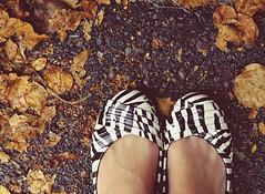 fall feet (Shandi-lee) Tags: road autumn brown white black fall feet wet leaves rain grey october shoes cement flats driveway zebra asphalt zebraprint