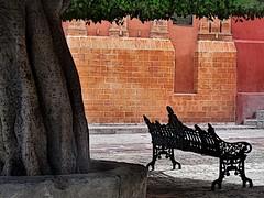 shady rest (msdonnalee) Tags: church mxico bench mexico furniture banco iglesia courtyard brickwall silla shade mexique sedia chaise stuhl banc cadeira messico   wroughtironbench takealoadoff  i  ironbench  photosfromsanmigueldeallende fotosdesanmigueldeallende giantlaureltree