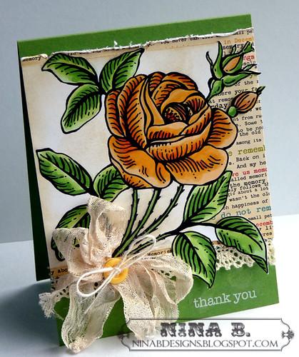 NR Rose 3