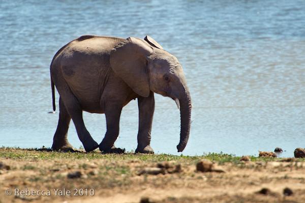 RYALE_SA_National_Park_Addo_68