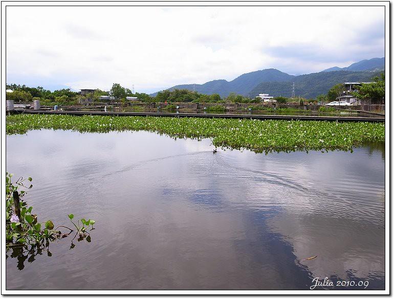 勝洋水草 (6)