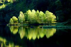 Étang de Lers (Ariège/Pyrénées) (PierreG_09) Tags: lake tree montagne automne lago lac arbre baum pyrénées étang pirineos ariège couserans llacspirineus