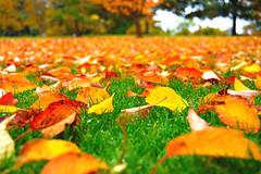 Color of Autumn (Johan Runegrund) Tags: colorphotoaward
