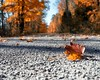 Autumn (ICT_photo) Tags: autumn red orange ontario colour fall leaf maple ictphoto ianthomasguelphontario