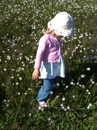 Tootle in the meadow