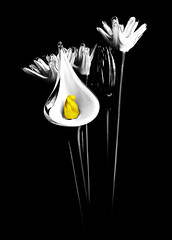 Glass Flowers (Our Land Photography) Tags: flowers our bw art fineart land handcolored viewcamera flickraward photographydave ourlandphoto kielwwwourlandphotocomfine