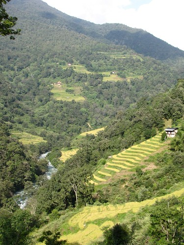 near Ngawang, Wangdue Phodrang