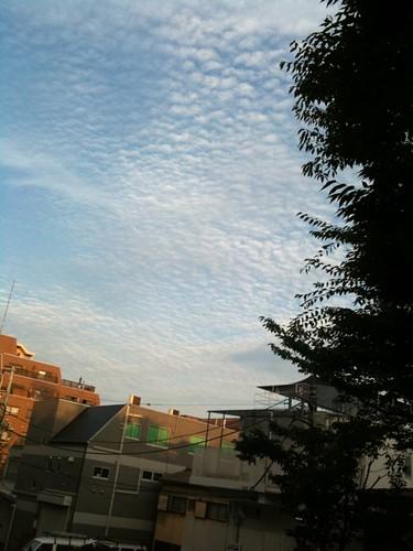 お、空を見たら鱗雲。夕方の散歩もいいねえ。