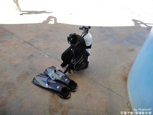 與海豚共潛,重裝蛙鞋都要自己帶