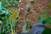 Beech climb (12) (jcw1967) Tags: trees house tree climb rope 山 beech fagus harewood sylvatica abseil 毛 climbtree 绳子 子 绳 johnwaller shānmáojŭ 山毛榉 榉 shéngzi 攀登爬 pāndēngpá