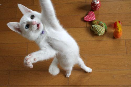 cute white rescued kitten