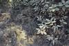 (n.states) Tags: oakland dust redwoodpreserve anthonychabon