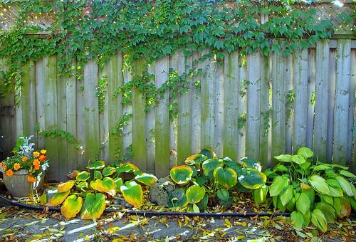 Garden Vignette by Kit Lang