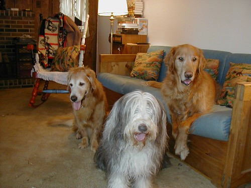 Farm dogs in 2000