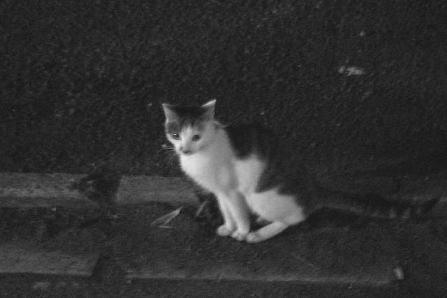 Today's Cat@2010-10-19