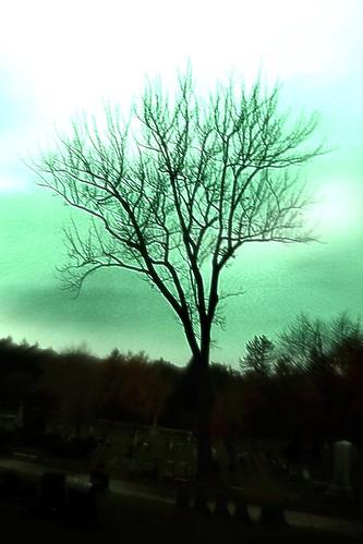 The Halloween tree.