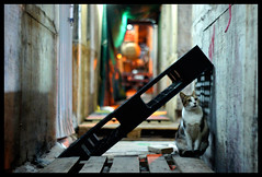 Hide (Lefty Jor) Tags: street light hk night cat hongkong dof bokeh sony leitz summitar5cmf2 thecatwhoturnedonandoff nex3