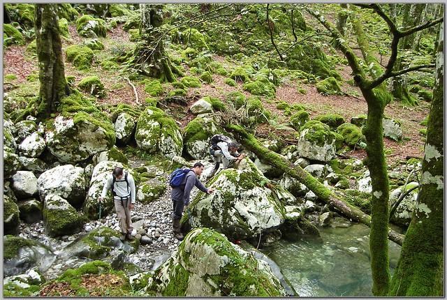 169.- Cruzando el río Samedón por el bosque del Monte Agüera.