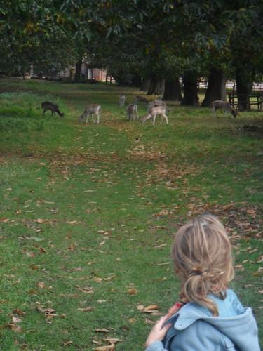 Jenna and deer