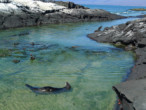 isla Fernandina - Galapagos Islands, Ecuador