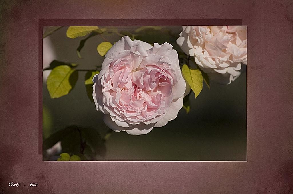 Mazorca rosas yahoo dating