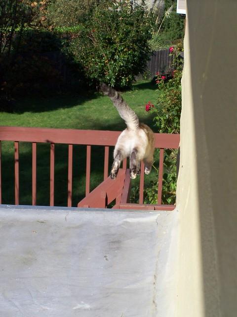oct 161 Violet jumping