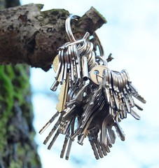 keys on a tree