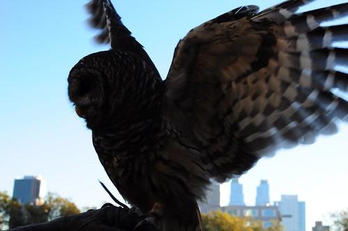 Bard Owl 3