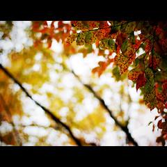 untitled (shotam) Tags: autumn color nikon snap nikkor  asuka 50mmf14d  asukavillage asukamura d80
