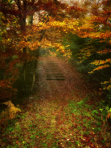 Autumn invites us to walk...