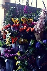(Finnith) Tags: uk flowers orchid flower colour london rose colours lily greenwich sunflower hydrangea arum flowerstall flowerseller greenwichmarket