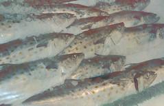 (Strawberry N3KO) Tags: sea food fish ice animal asian dead frozen kat market honeydew seafood n3ko strawberryn3ko