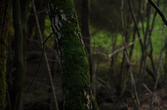 mossontree2
