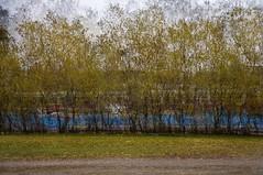 Das Experiment 40 (Egress) (pni) Tags: road city blue sky tree green nature grass yard train fence suomi finland leaf helsinki sand multipleexposure plastic helsingfors gravel tripleexposure multiexposure aurorankenttä skrubu dasexperiment pni manandenvironment pekkanikrus töölönlahdenpuisto