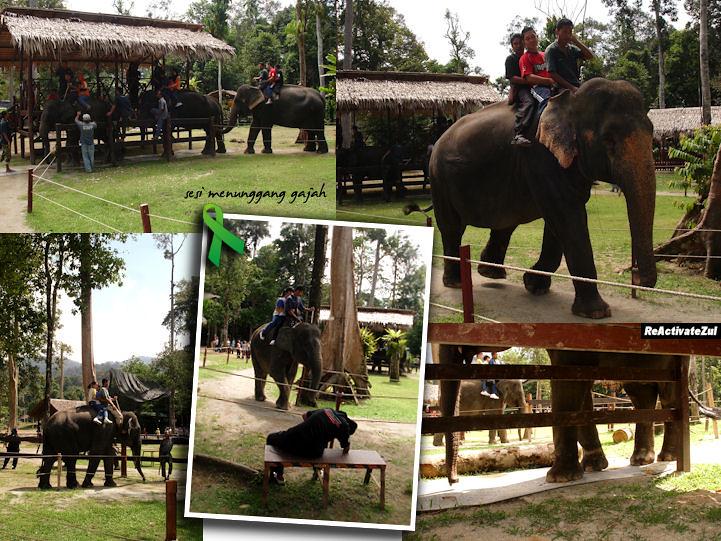 Pusat Konservasi Gajah - elephant riding