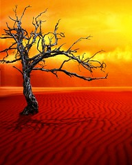 Premade_24 (~Brenda-Starr~) Tags: red sky orange hot tree clouds sand desert background stock creativecommons resource cclicense premade brendastarr freeforuse backgroundsonly thestockyard