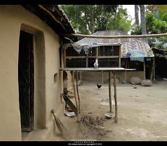 Bangladesh village traditional house (Asif Adnan Shajal) Tags: house rural landscape countryside village traditional bongo gram bangladesh bangla explored chuadanga villageofbangladesh framebangladesh asifadnanshajal chuadangabangladesh