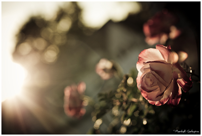 Roses and rays