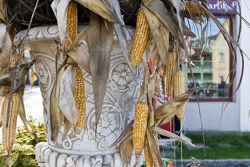 Autumn Display of Corn