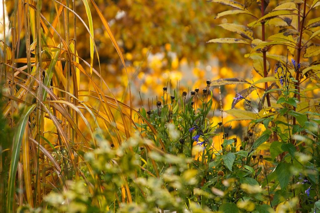 autumnvignette1