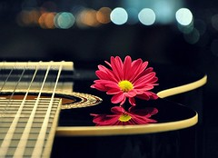 Flower Pop (Violet Kashi) Tags: city pink music reflection classic colors night photography lights dof bokeh guitar explore daisy frontpage  fretboard