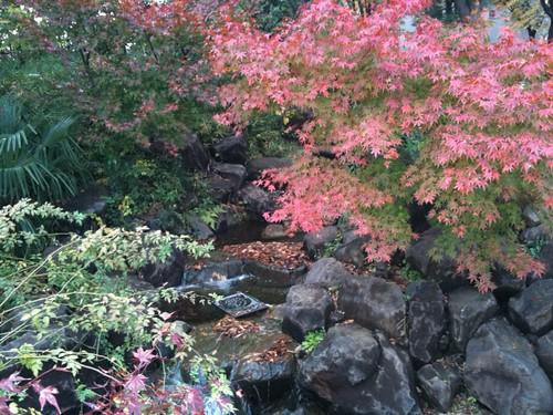 渋谷の秋も深まってきました。