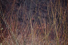 grasses and weeds. . . . . (Ed Brodzinsky) Tags: november weeds fallfoliage grasses autumncolor creekside elkcreek schenevus otsegocounty edbrodzinsky