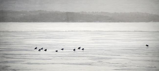 10 fåglar